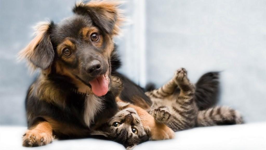 Houd uw hond gezond en laat hem jaarlijks inenten en controleren