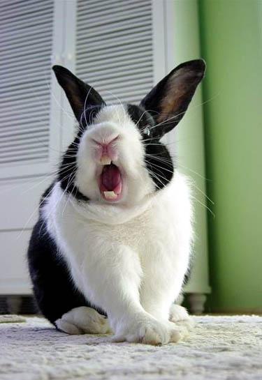 funny-bunny_4-jpg